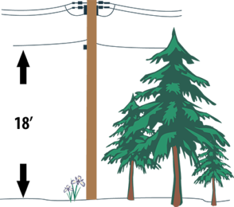 Tree underneath powerlines. Annotation shows there is 18 feet of space underneath the bottom wire.