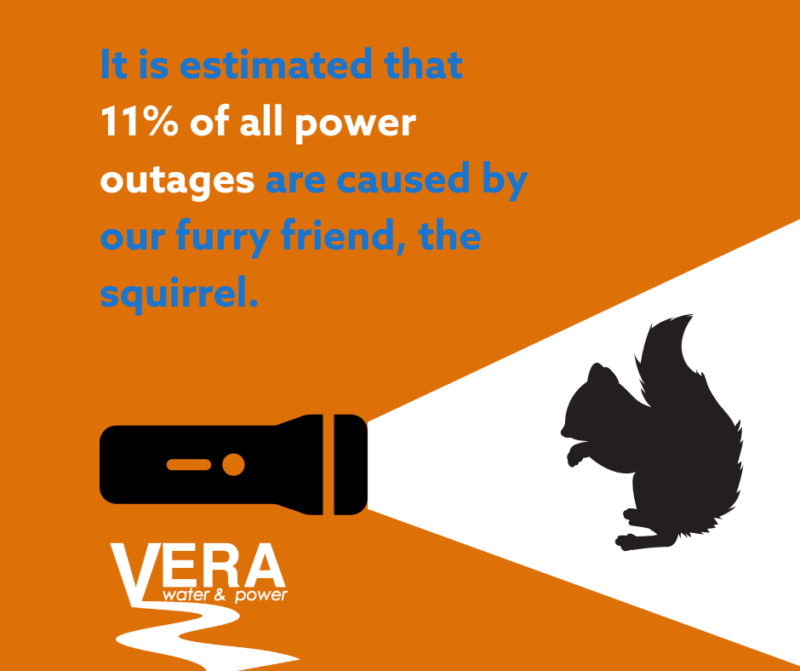 It is estimated that 11% of all power outages are caused by squirrels.